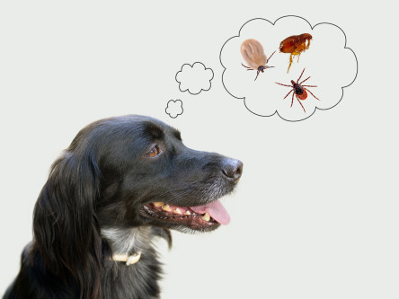 How Quickly Can A Tick Kill A Dog