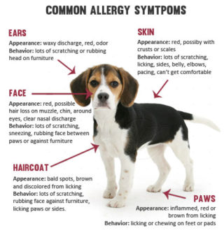 Dog Food Allergy Rash Pictures