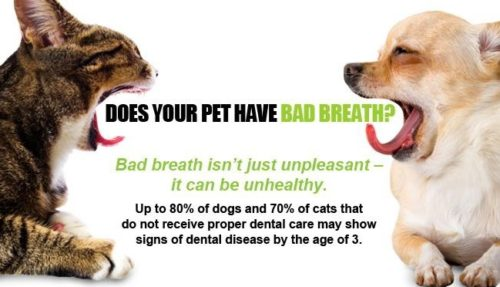 How To Get Rid Of Dog Breath Naturally